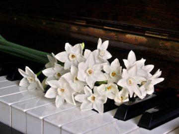 <ピアノが弾ける女性募集>企業VTR 出演モデル募集!の画像